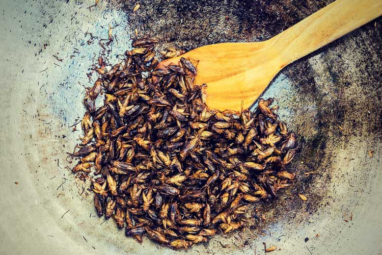 Insect Protein Powder exo bars crickets