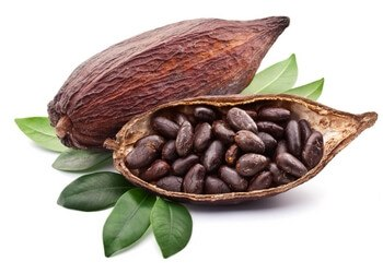 Best epicatechin supplements cacao
