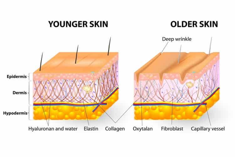 Best Collagen Supplement skin aging
