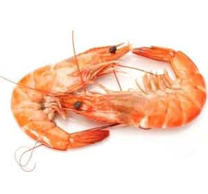 Natural Vasodilators Foods That Increase Sexual Function shrimp