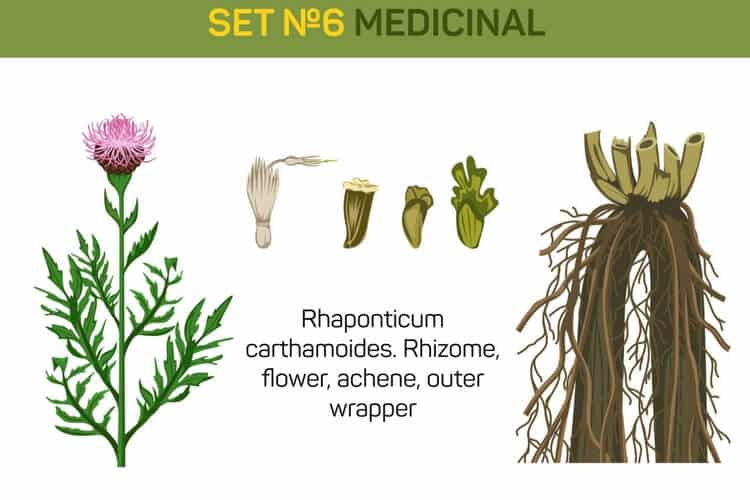 rhaponticum carthamoides
